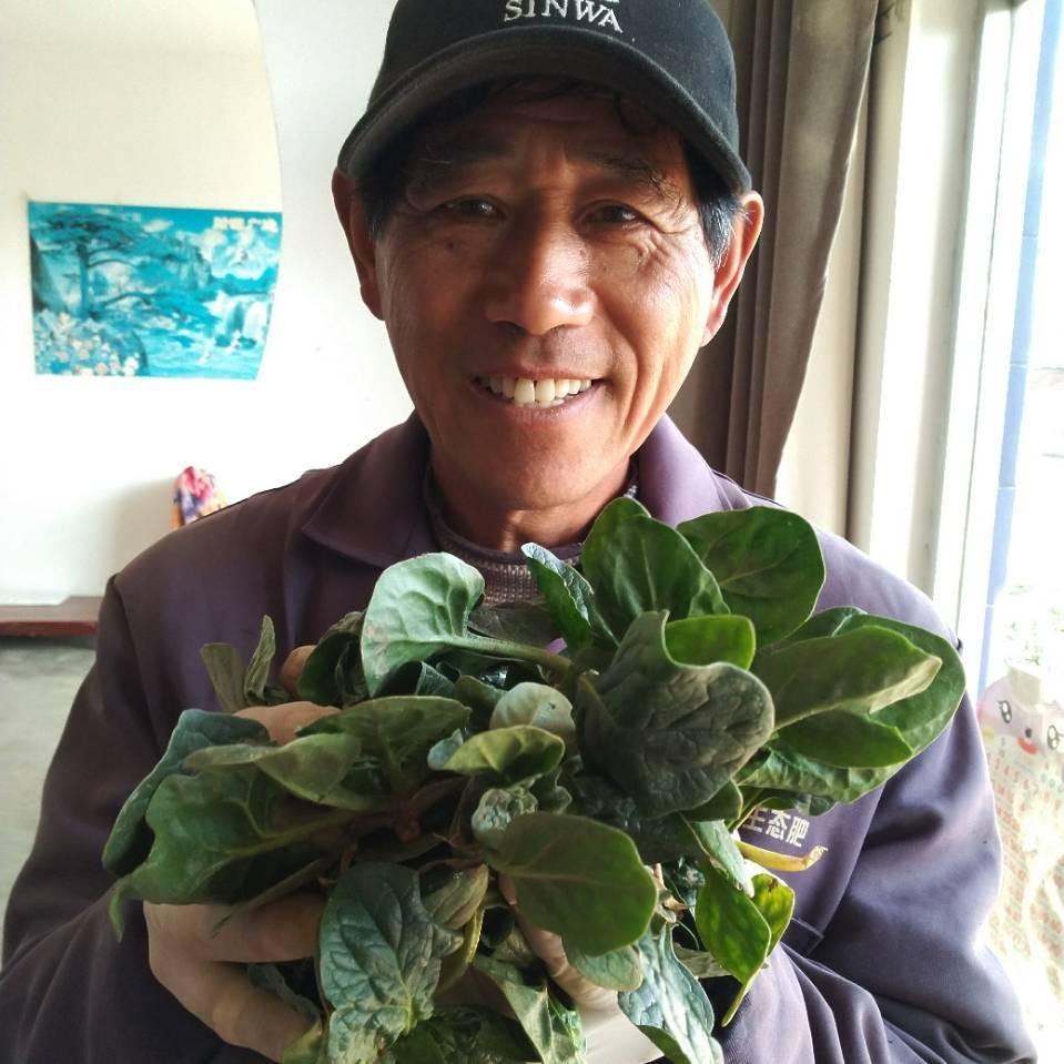 沛县无公害菠菜如何选择?
