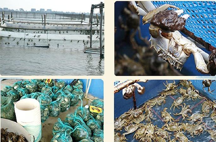 阳澄湖边上的大闸蟹农家乐哪家便宜爽爽地吃