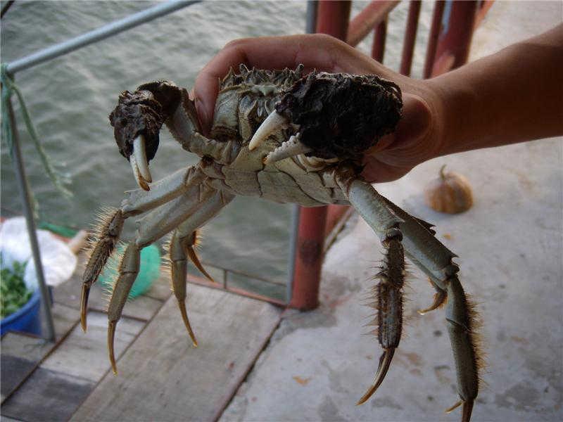 莲花岛价格低的吃蟹的农家乐哪家实惠本地蟹农